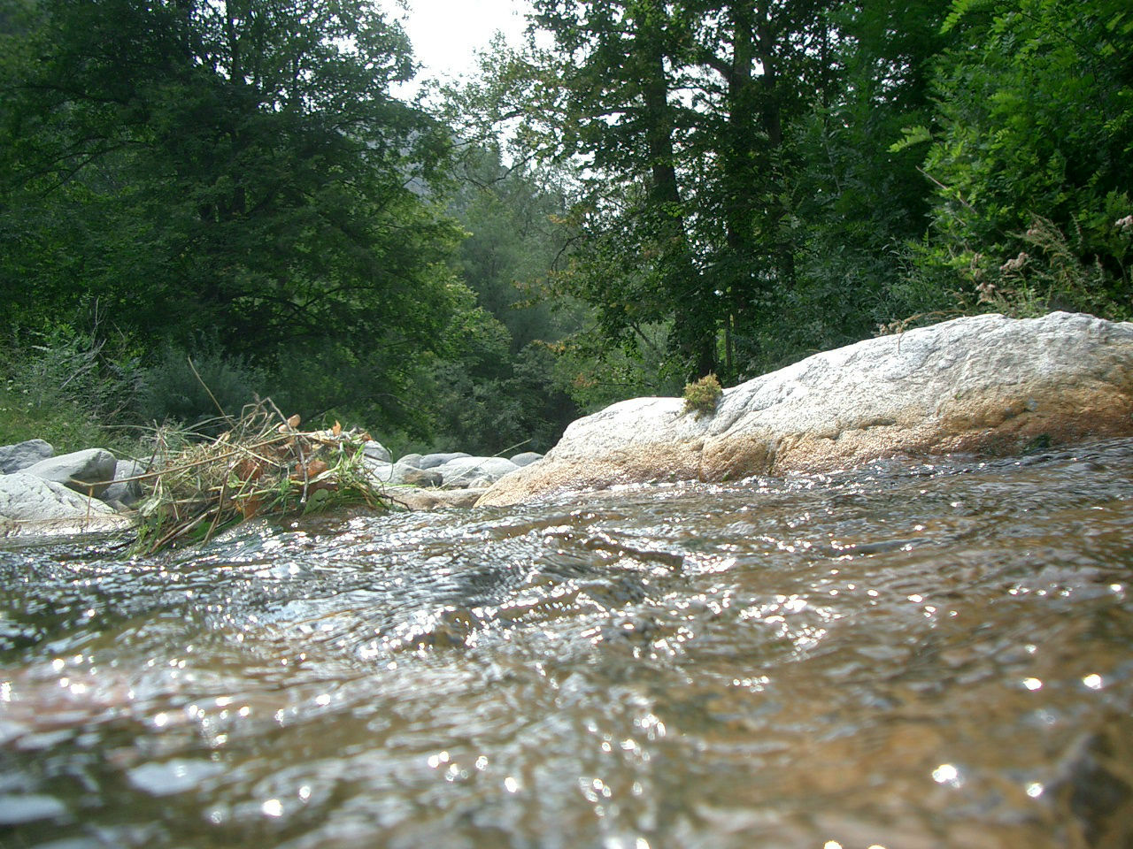Le bruit de l'eau a des vertus apaisantes sur les êtes vivants